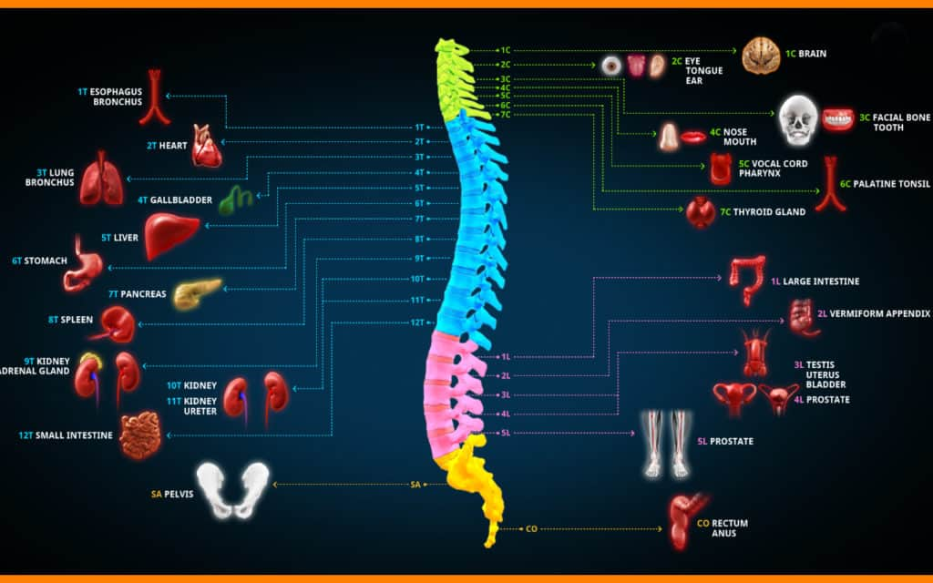Spine Science